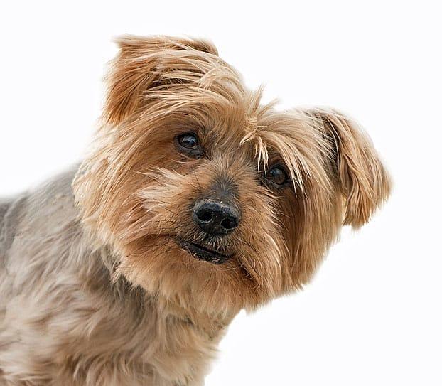 Annuleringsverzekering voor huisdieren - ontvang nu 10% premiekorting!