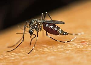 Het Zika-virus en je reis- en annuleringsverzekering