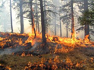 Doden bij Griekse bosbranden