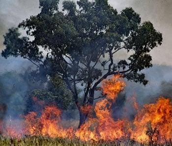 Bosbranden Australië en je reisverzekering