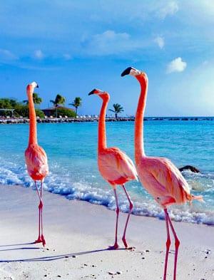 Voordelige reisverzekering voor Curacao