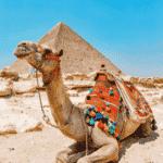 Reisverzekering Egypte met corona dekking